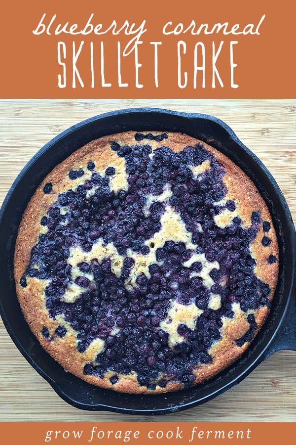 Blueberry cornmeal cake in a cast iron skillet.