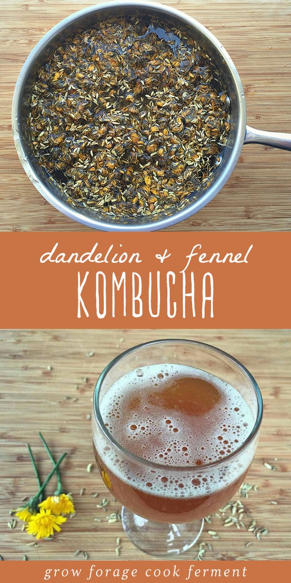 Dandelion and fennel steeping with tea in a pot, and a glass of dandelion and fennel kombucha.