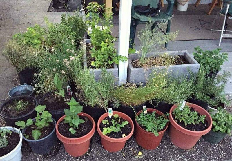 herb corner
