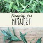 A mugwort plant, and foraged mugwort leaves on a cutting board.