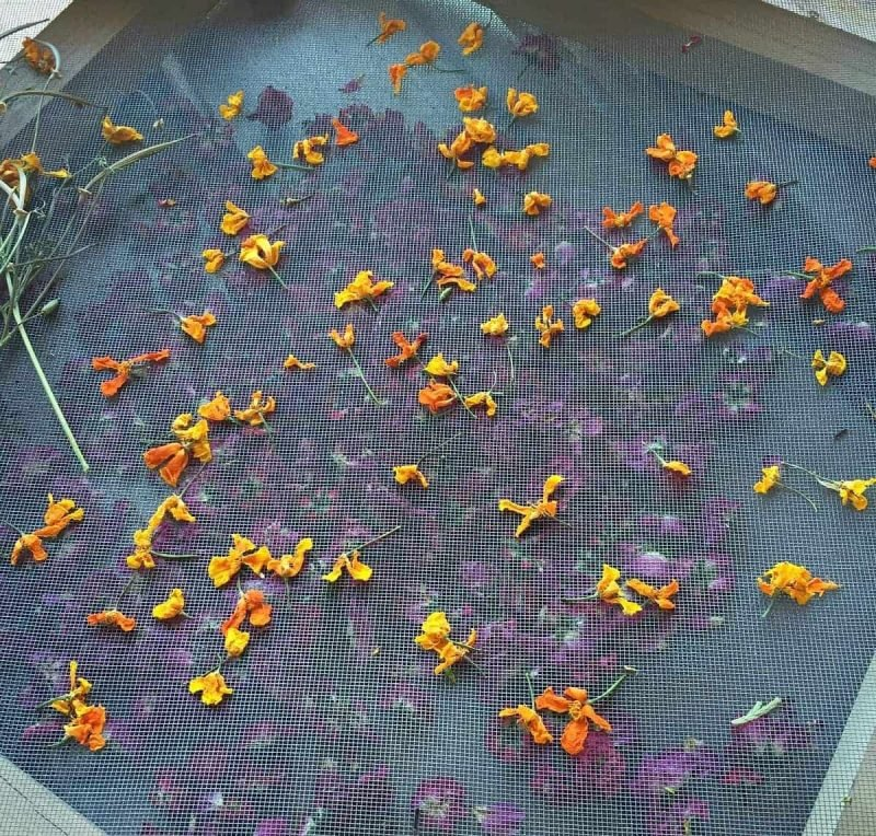 dried poppies on a drying screen