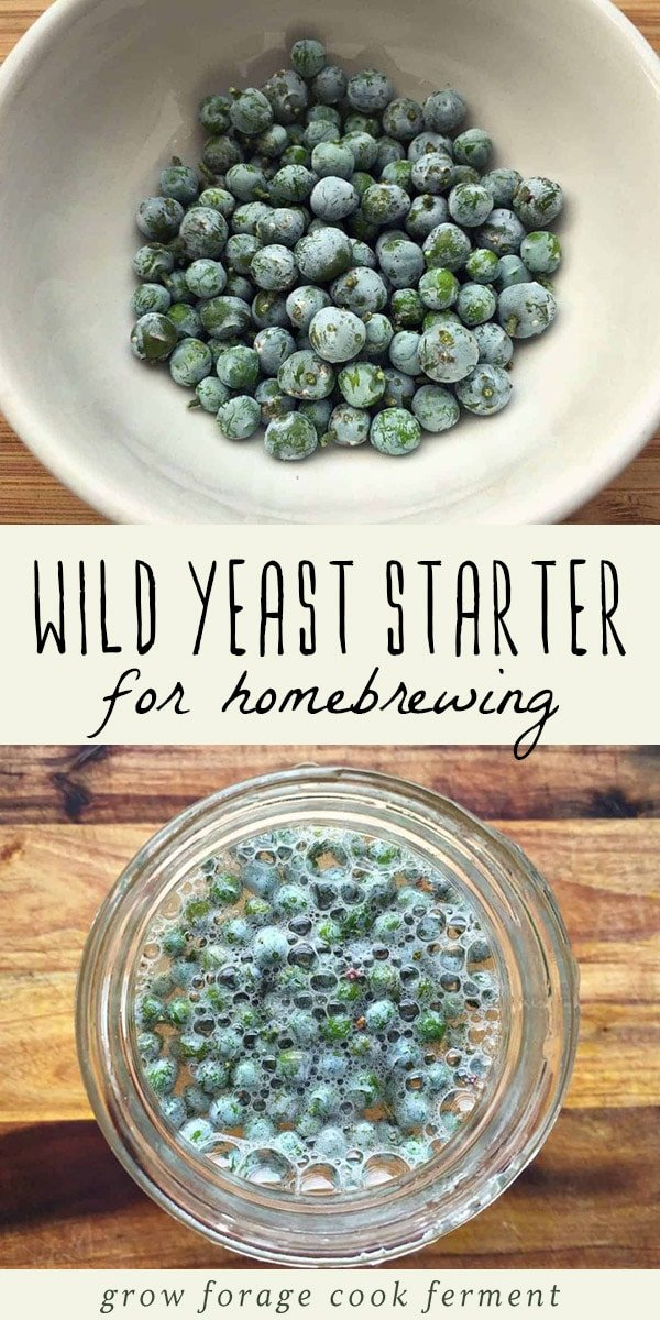 A bowl of foraged berries covered in wild yeast, and a jar of wild yeast starter (for homebrewing).
