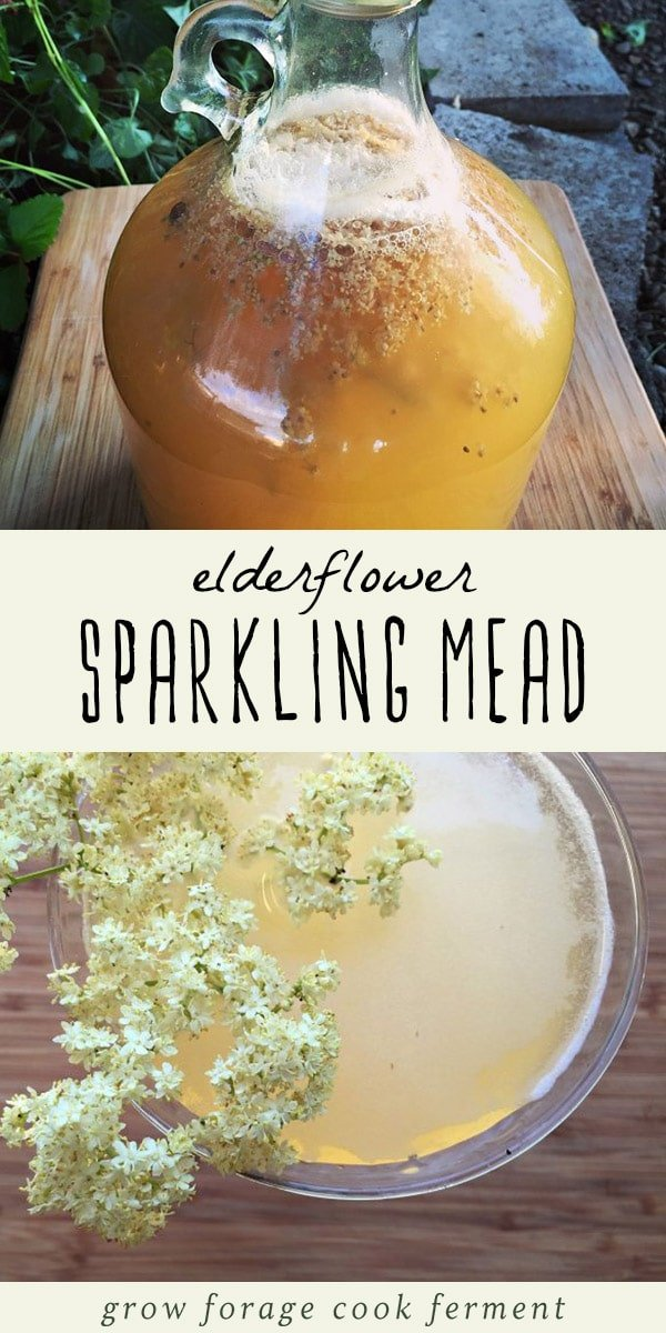 Go foraging for elderflowers, and then make this sparkling mead recipe! This easy homemade sparkling elderflower mead recipe is low alcohol, delicately flavored, and the perfect foraged drink for a hot summer day! #foraging #mead #elderflower