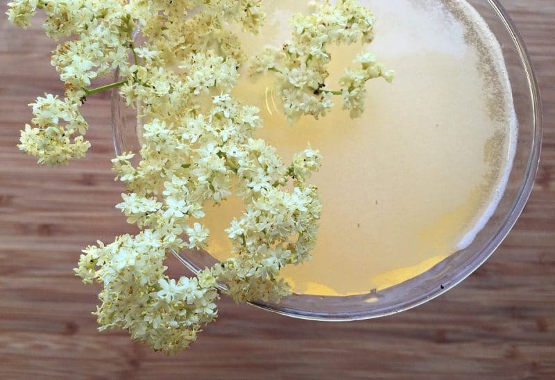 a glass of sparking elderflower mead garnished with an elderflower