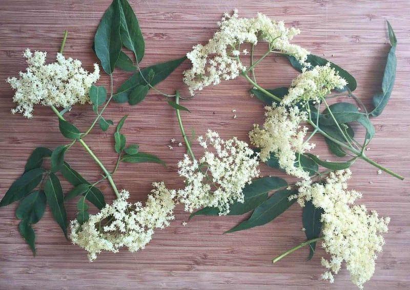 fresh elderflowers on a cutting board