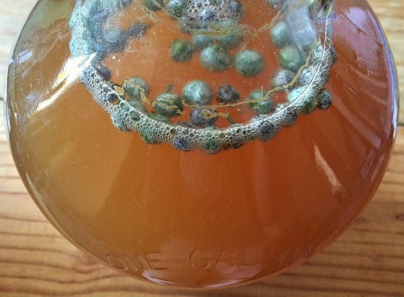 mugwort beer bubbles