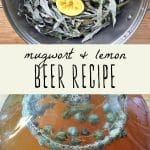 Foraged mugwort and lemon in a pot, and a gallon jug of mugwort lemon beer.