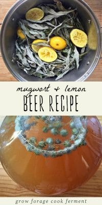 Foraged mugwort and lemon in a pot, and a gallon jug of mugwort lemon beer.