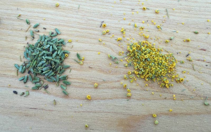wild fennel seed and pollen