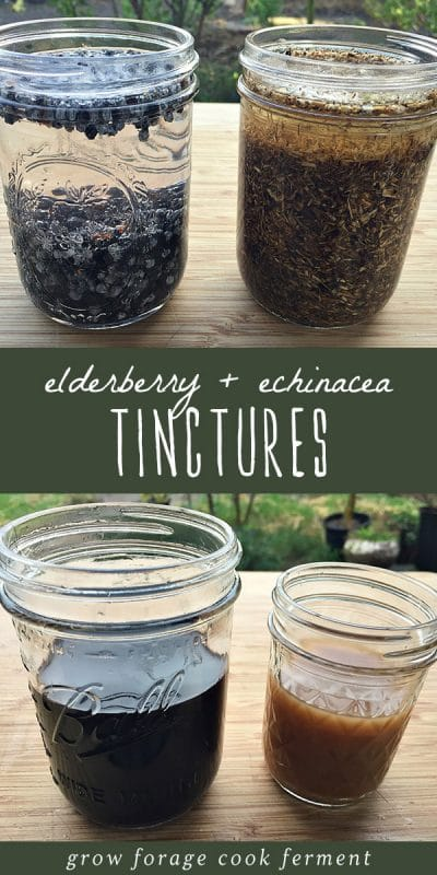 Two jars of tinctures steeping and two finished jars of homemade elderberry and echinacea tinctures.