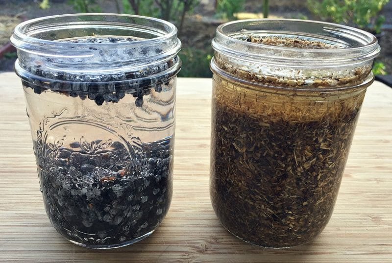 starting-elderberry-and-echinacea-tincture