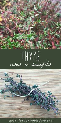 Fresh thyme growing in a garden and fresh thyme on a cutting board.