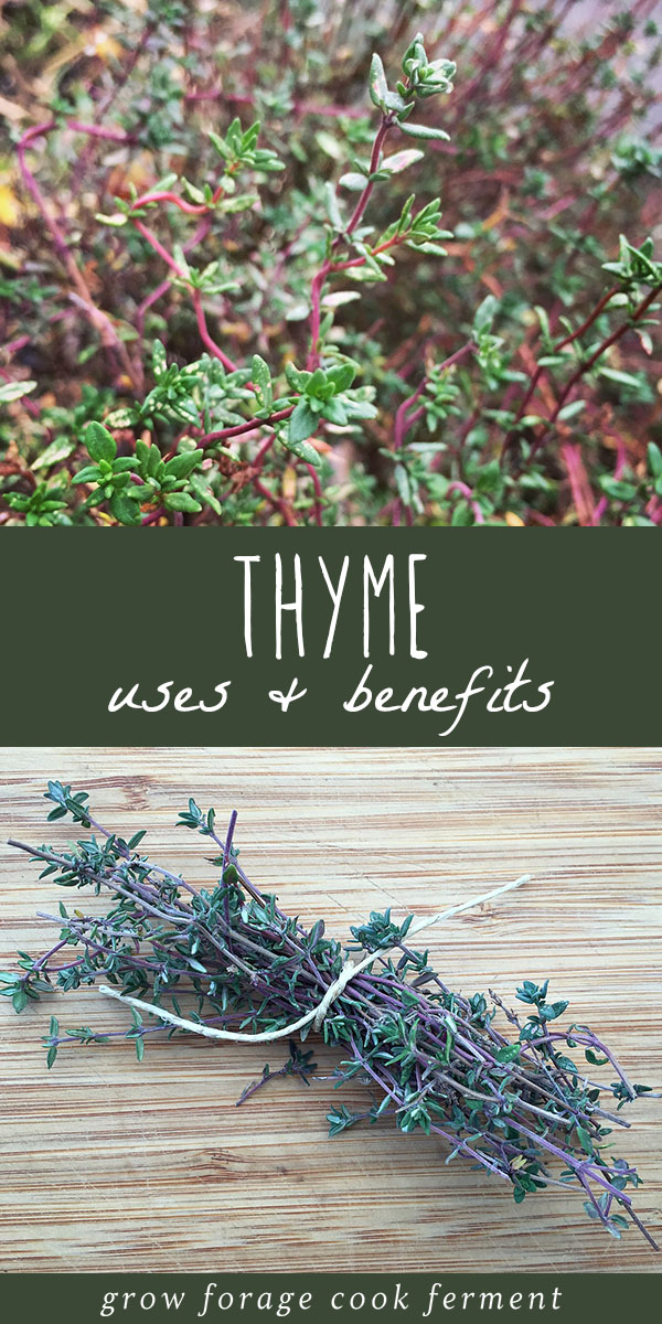 Thyme is an amazing herb that has culinary and medicinal uses. It's an easy and useful plant to grow in your garden, and wonderful for attracting bees. Thyme grows easily, in many locations, is a delicious cooking herb, and has so many uses in an herbalism practice. Learn about how to grow thyme, how to use thyme in the kitchen, and all of of its powerful herbal medicine benefits! #thyme #garden #growing #herbalism #herbalmedicine #herbs #naturalmedicine #bees