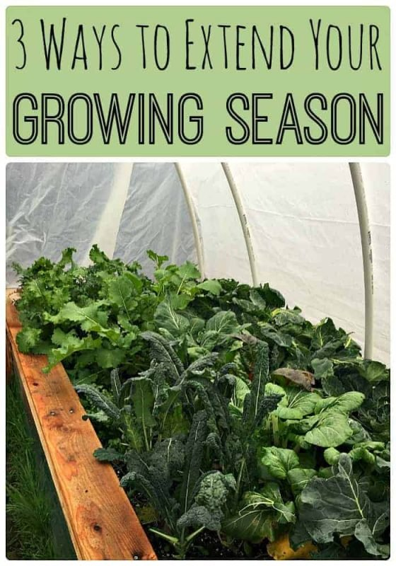 3-ways-to-extend-your-growing-season