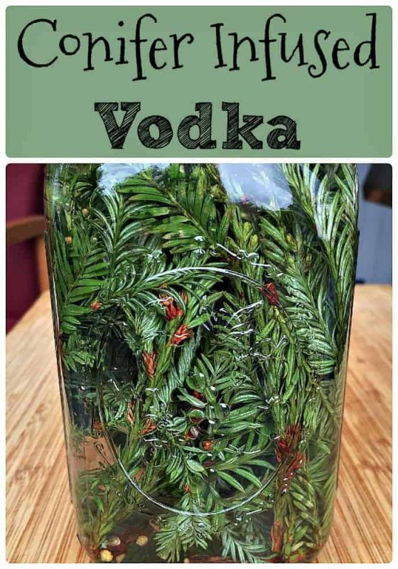 conifer-needle-infused-vodka