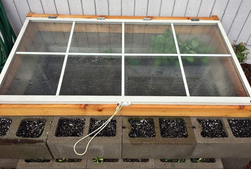 cold-frame-closed