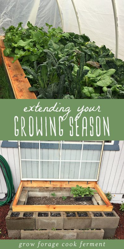 Vegetables growing in a simple hoop house and a cold frame to extend the growing season.