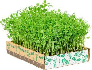 microgreens-kit