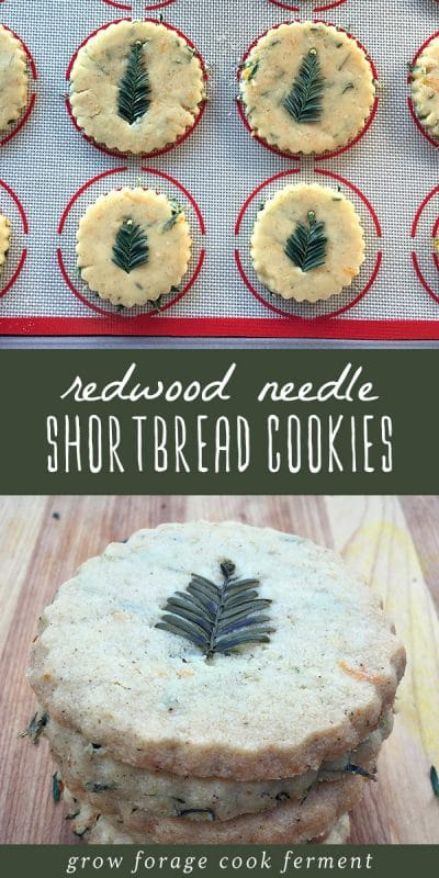 Foraged redwood needle short bread cookie dough on a baking sheet, and a stock of cooked shortbread cookies.