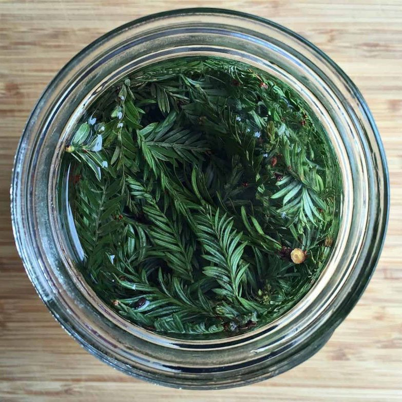 An overhead view of conifer infused vodka in a glass jar on a wood background.