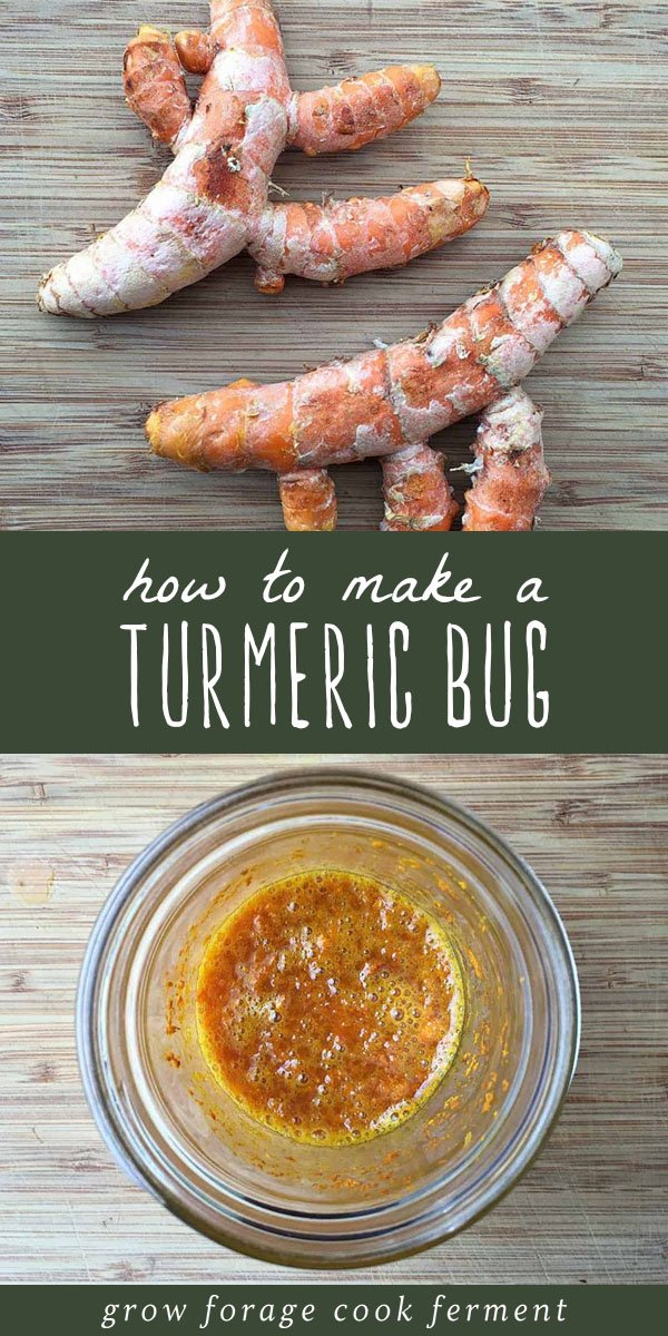 Learn how to make a fermented turmeric bug, similar to a ginger bug but made with turmeric root instead. Use it as a base for naturally fermented sodas. #turmeric #ferment