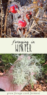 Frozen rose hips and winter foraged usnea lichen.