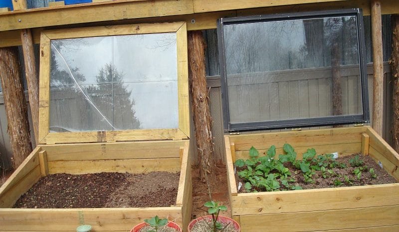 wooden-cold-frames