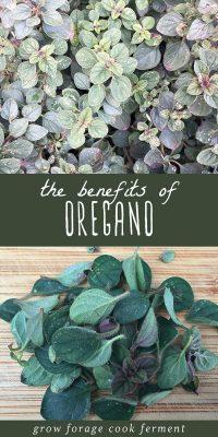 Oregano growing in a garden, and fresh oregano leaves on a cutting board.