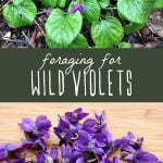 Wild violets growing in a yard, and foraged wild violet flowers on a cutting board.