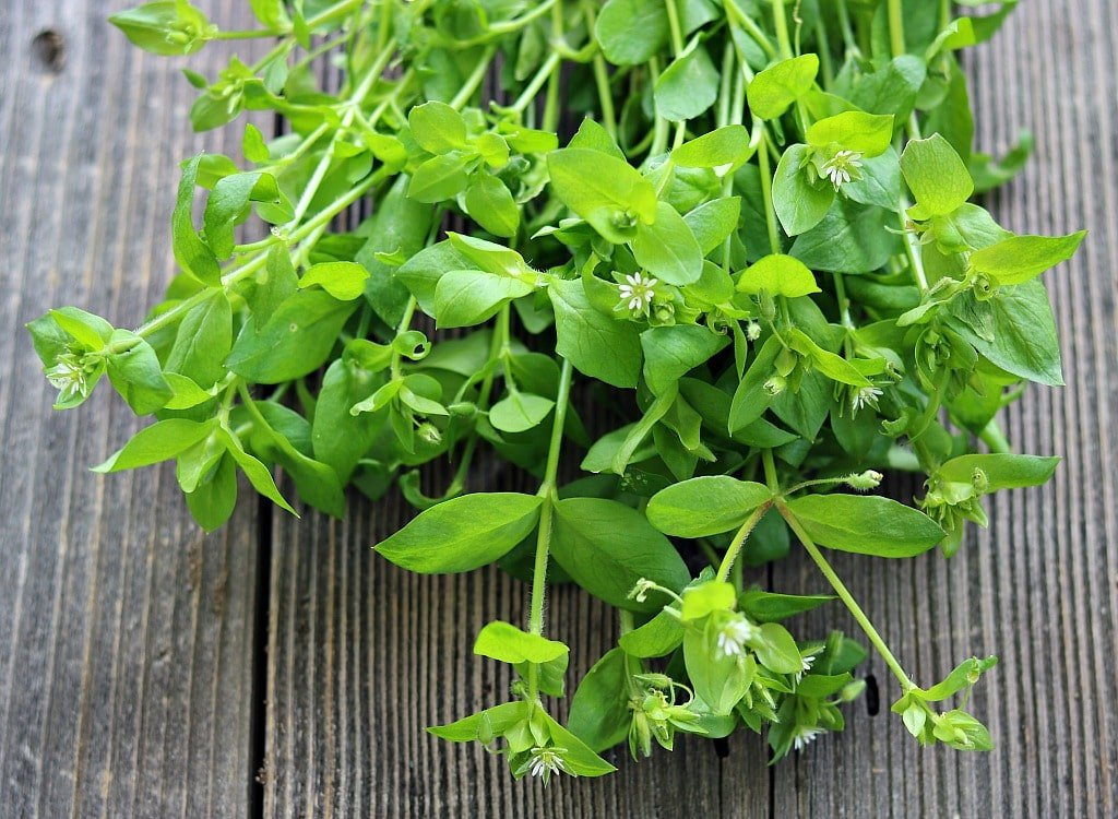 a bunch of chickweed on a wooden table