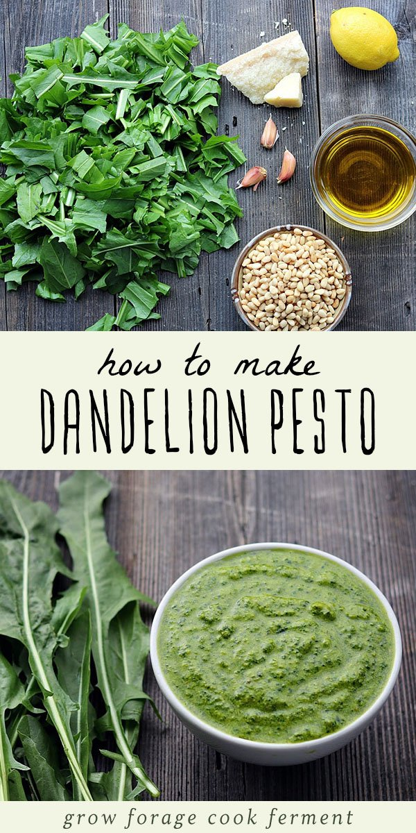 Spring is the perfect time to go foraging for dandelion greens, and this pesto is a delicious traditional way to use those dandelion greens! It's packed with healthy gut healing and anti-inflammatory ingredients, easy to make, and so delicious. Give this dandelion pesto recipe a try with your foraged dandelion greens! #forage #dandelion