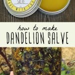 A tin of dandelion salve and a jar of dandelion infused oil.