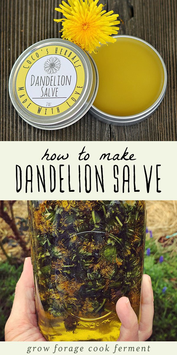When dandelions are blooming make this healing dandelion salve recipe using foraged dandelions! This salve has many medicinal benefits and healing properties, and it good for all kinds of aches and pains. This is such an easy recipe for any beginner herbalist to make, and the perfect salve to have in your natural medicine cabinet. #herbalism #naturalremedy #herbalmedicine #dandelions #salve