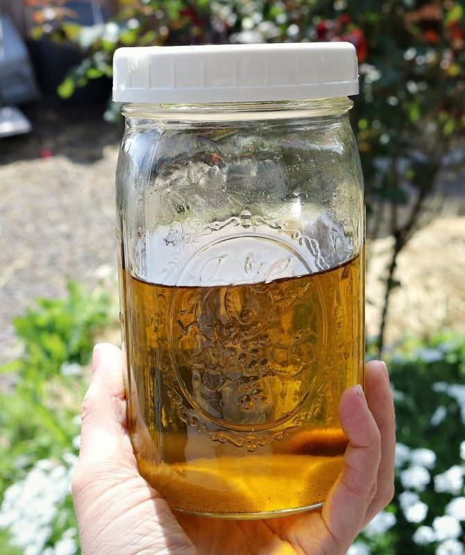 Golden yellow dandelion infused oil