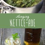 Stinging nettles in a pot, and a glass of stinging nettle lemonade.