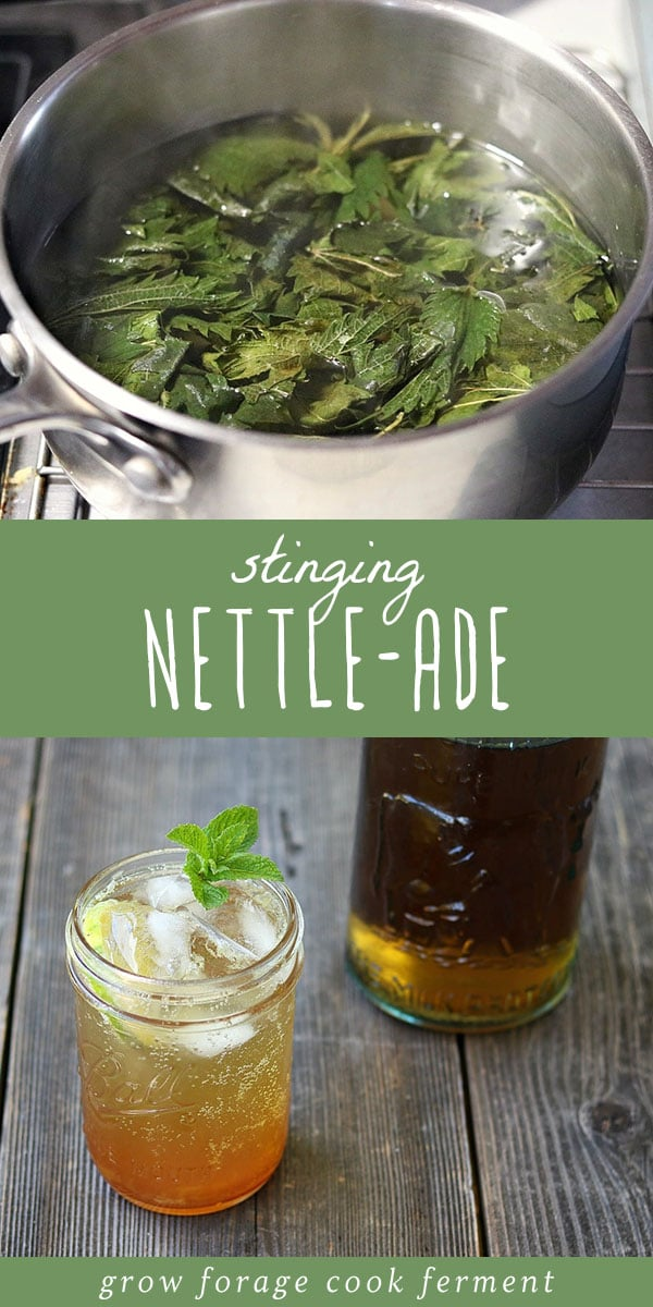 Do you have foraged stinging nettle that you've dried or recently collected? Make this stinging nettle-ade! It's a refreshing sugar free lemonade recipe that's easy to make and sugar free. It's the perfect foraged drink recipe. #forage #wildcrafting
