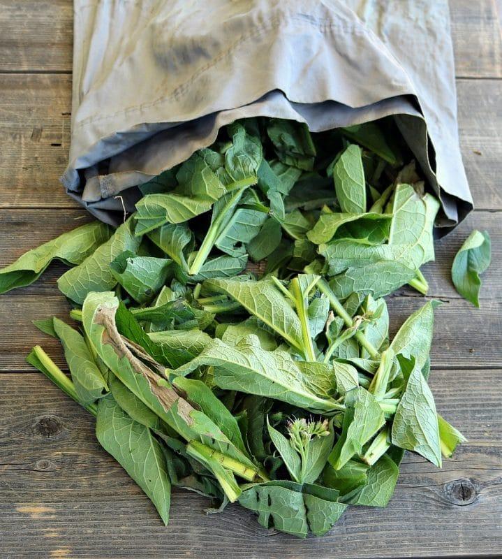 Comfrey Tea: Homemade Natural Fertilizer