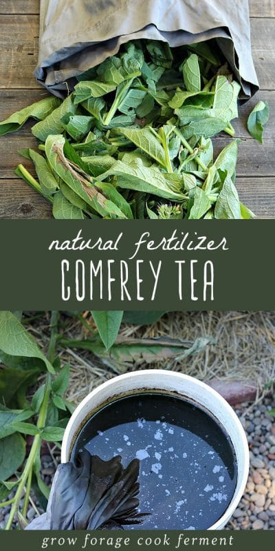 A pile of comfrey leaves, and comfrey tea natural fertilizer in a large bucket.