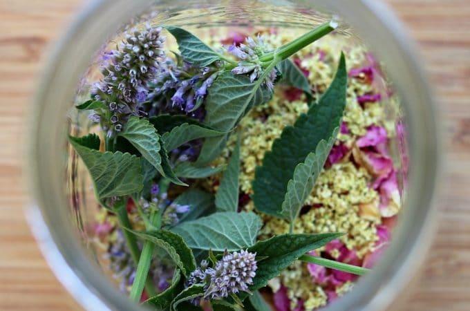 Wildflower Herbal Infusion Tea