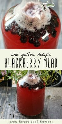 A gallon jug of blackberry mead.