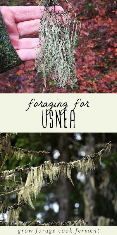 A woman holding usnea, and usnea lichen growing in a forest.