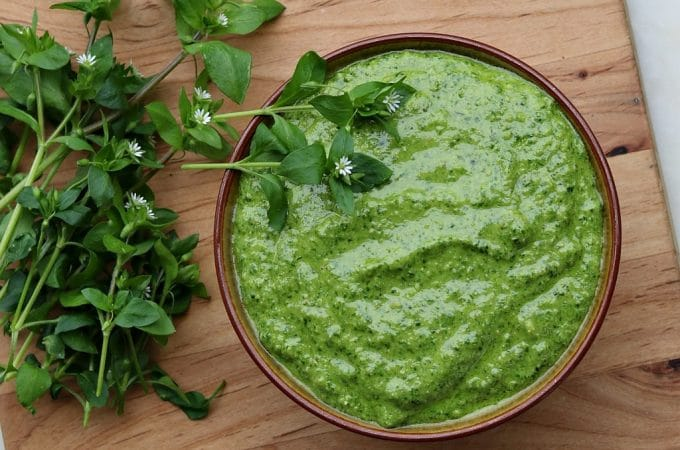 Chickweed Pesto: Wild Greens Superfood Recipe