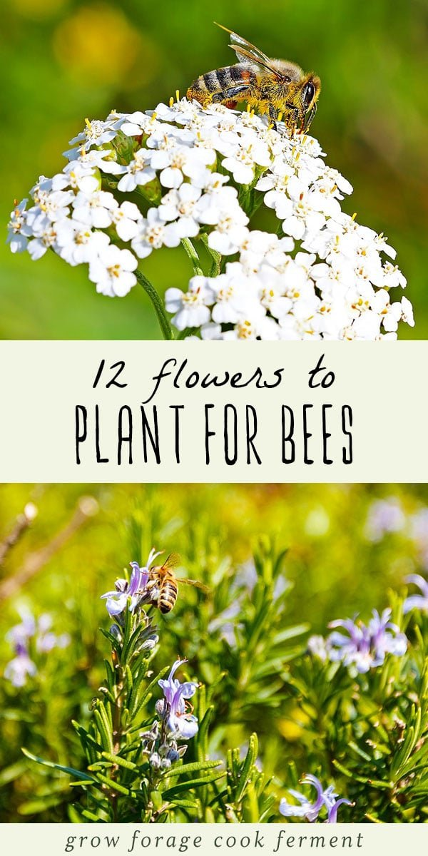 Bees are so important for pollination and the ecosystem, and sadly the bee population is in decline. Learn about 12 common flowers to plant for the bees. This list of flowers to attract bees in your garden or yard will make a beautiful pollinator garden that is beneficial for both us and the bees! #bees #garden #growing #flowers