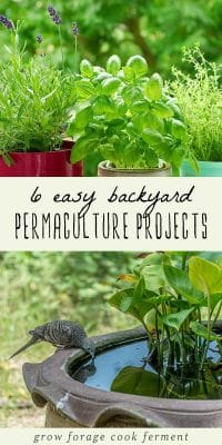 Backyard permaculture projects - potted plants, and outdoor fountain.
