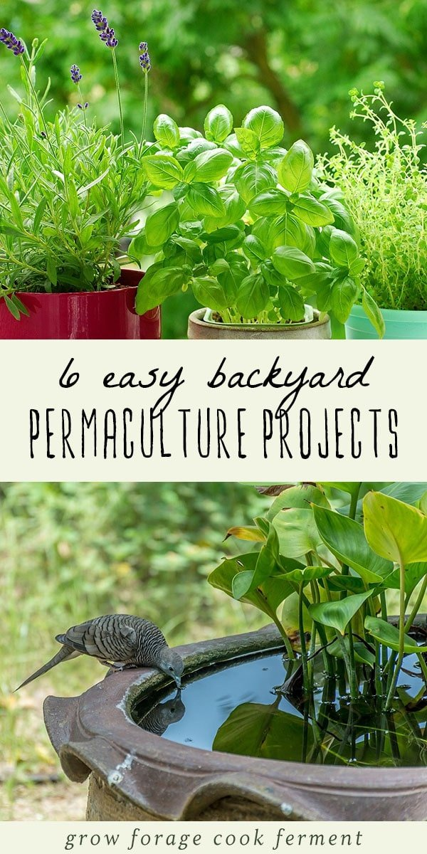 Backyard Permaculture 6 easy backyard permaculture projects for beginners