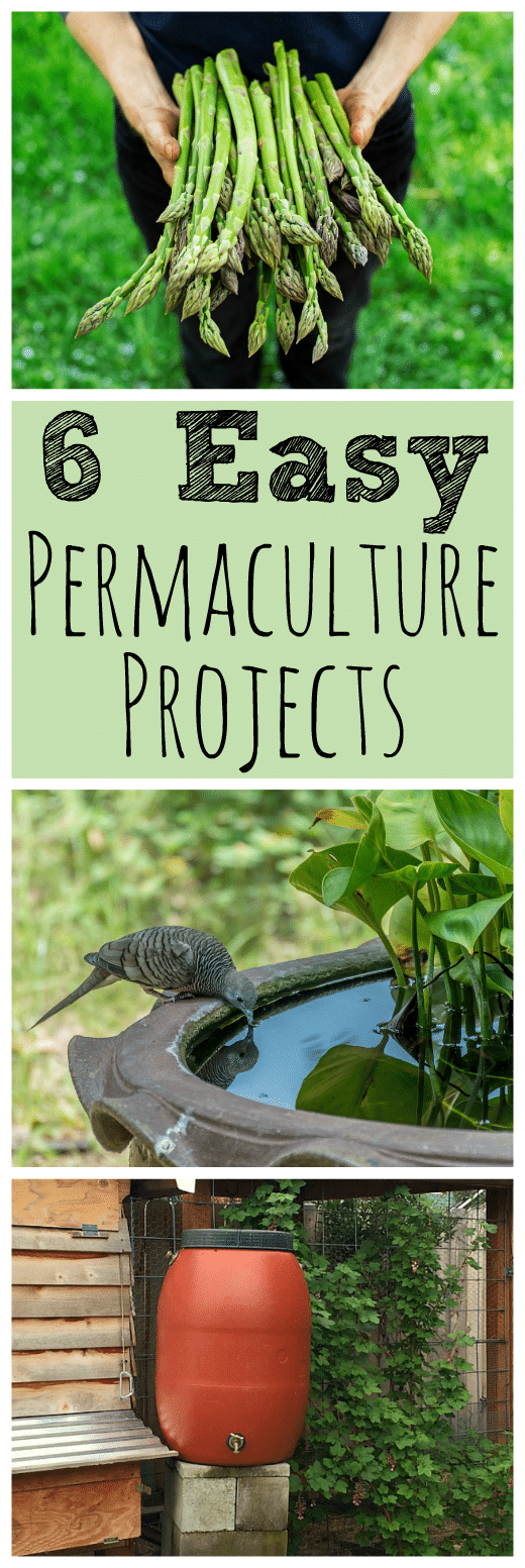 These six easy backyard permaculture projects for beginners will get you on your way to a mini permaculture paradise! #permaculture #gardening