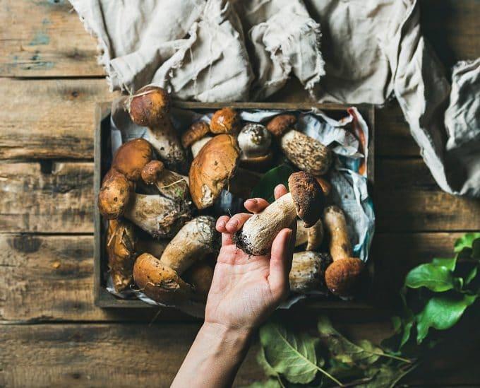 freshly harvested porcini mushrooms