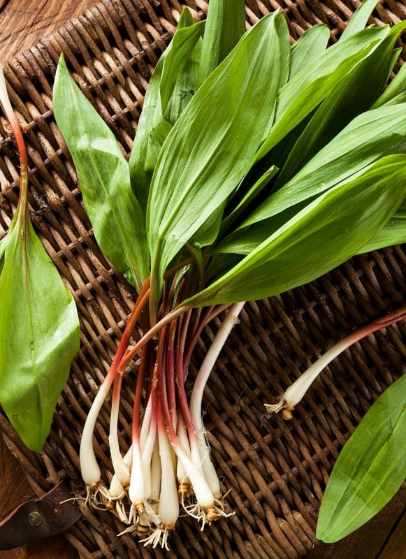 wild harvested ramps