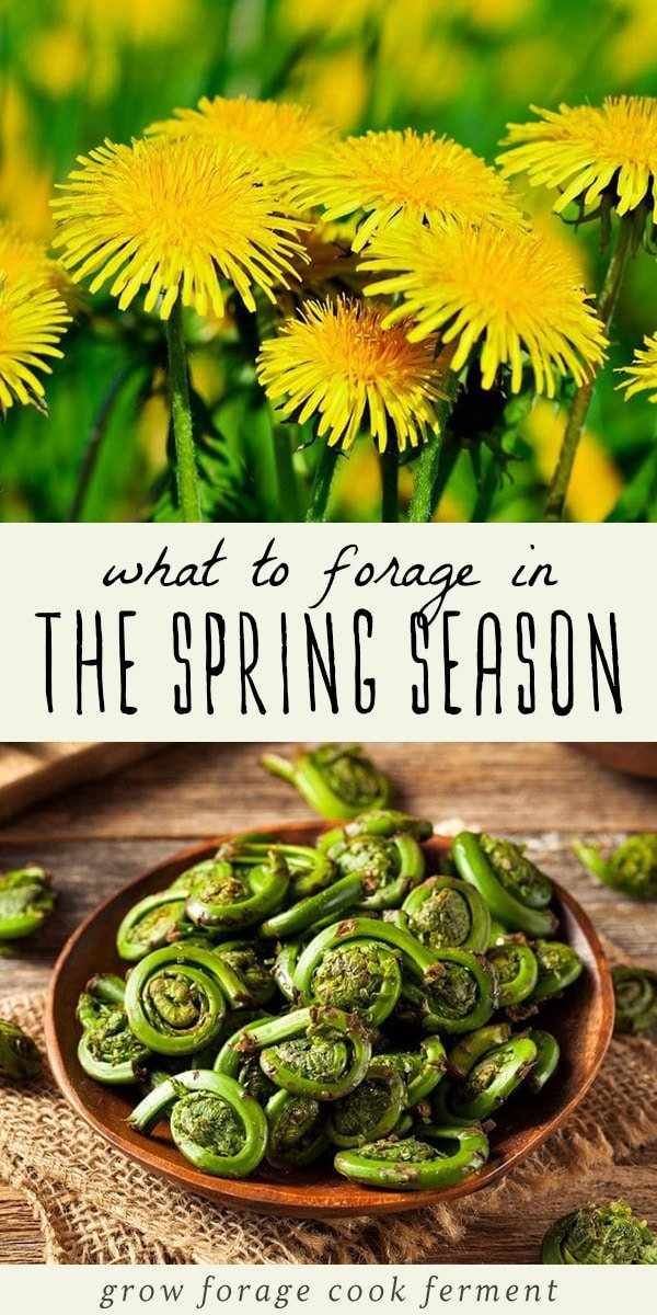 Dandelions and foraged fiddlehead ferns on a wood table.