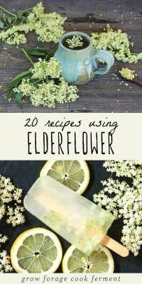 Elderflower tea and elderflower popsicles for a post on using elderflower.